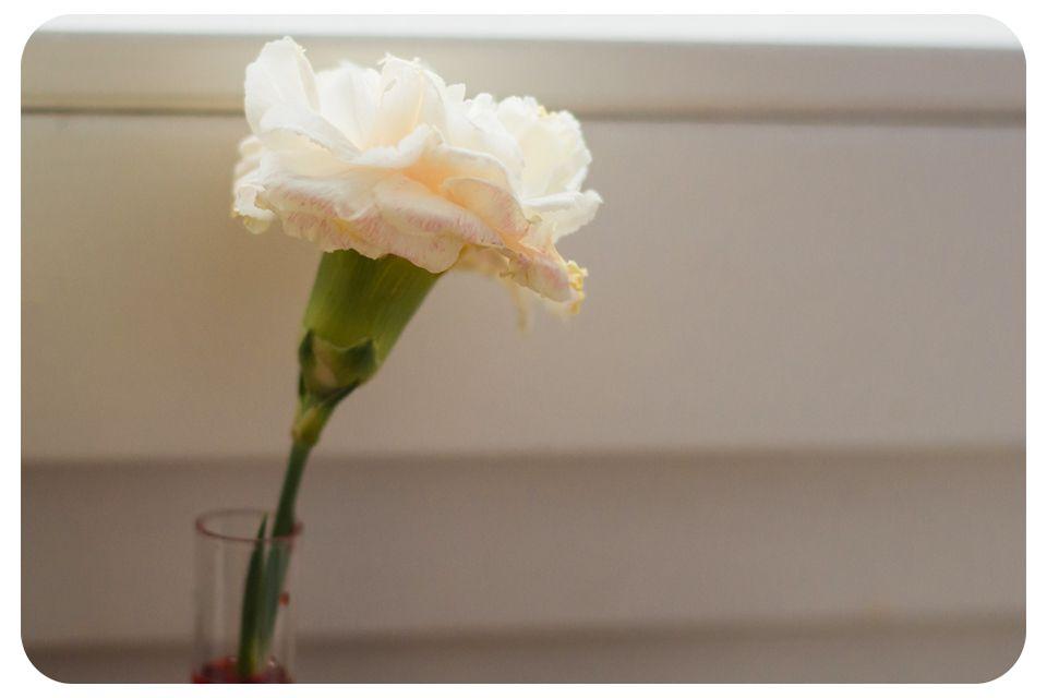 kvety2