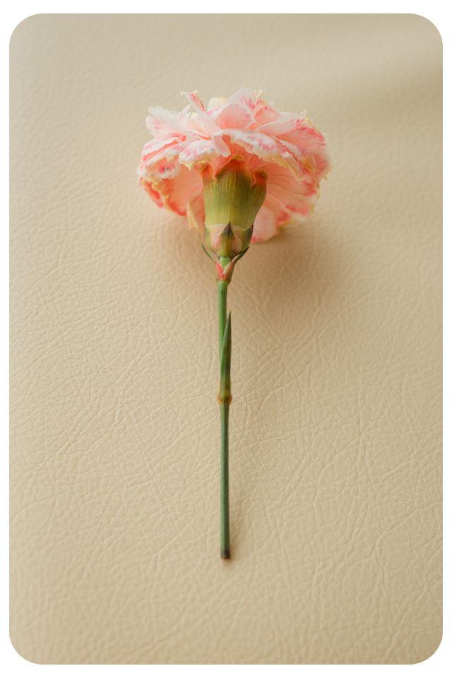 kvety4